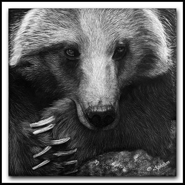 Patience Is A Virtue - Scratchboard Grizzly Bear