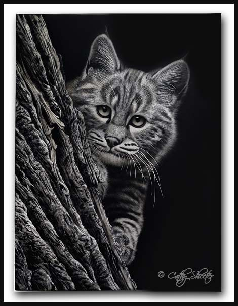 'Peek-A-Boo' - Bobcat Kittten Scratchboard Art