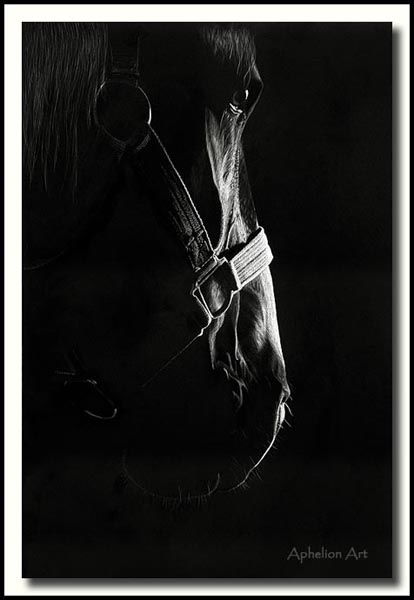 The Patriarch - Scratchboard Percheron Draft