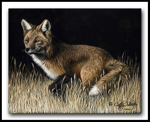 Poised - Scratchboard Art - Red Fox