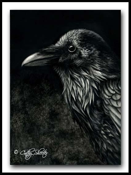 Common Raven- Scratchboard
