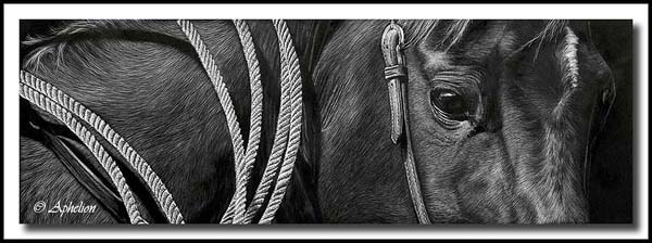 Roping Horse; scratchboard art by Cathy Sheeter;  quarter horse
