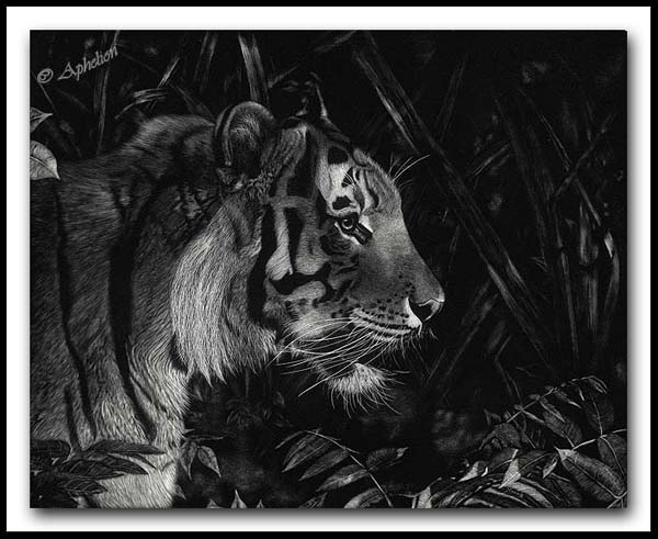 Rustle In The Brush - Bengal Tiger