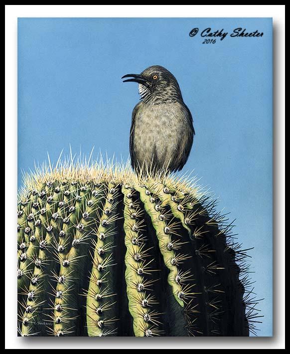 Saguaro Singer - Scratchboard Curve-Billed Thrasher