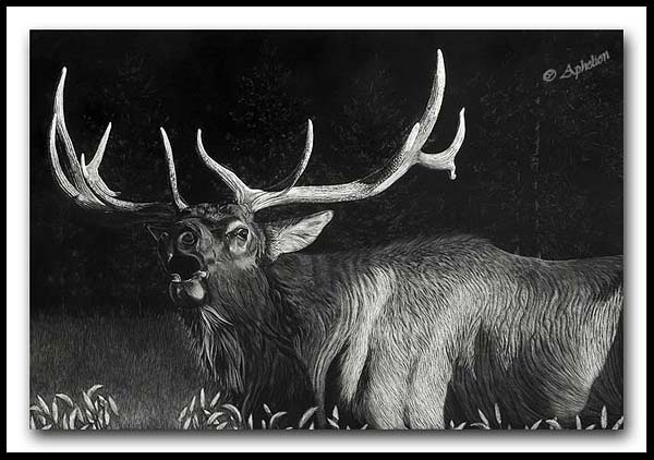 September Serenade - Elk Scratchboard