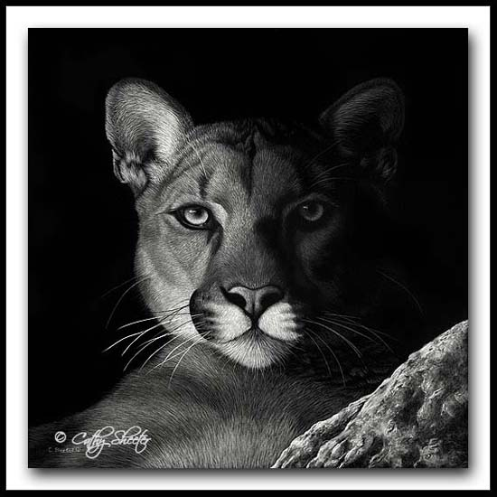 Shadow Cat- Scratchboard Mountain Lion