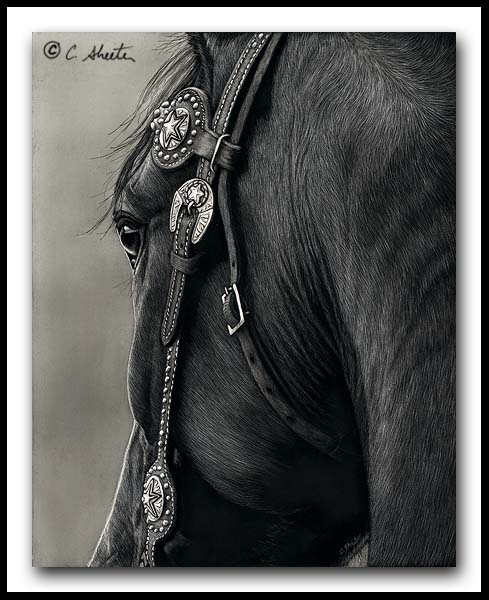 Shine On - Scratchboard AQHA