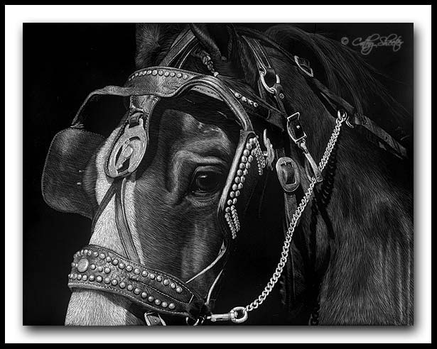 Leading The Team - Shire Scratchboard