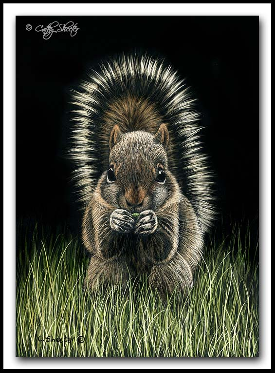"""Shirley the Baby Squirrel"" - scratchboard"