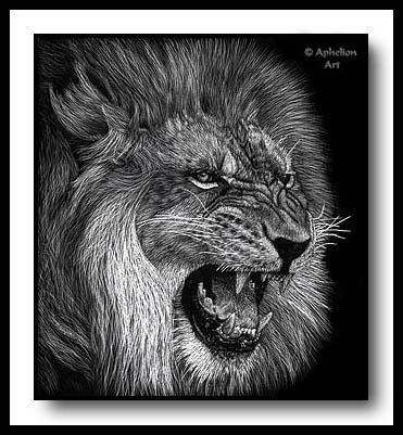 Snarl - scratchboard lion