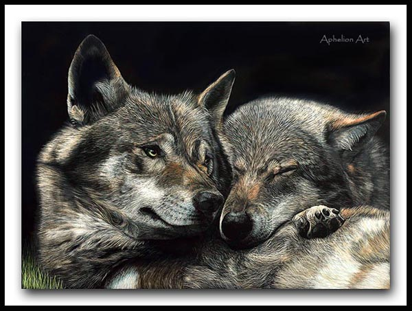 Soul Mates - Iberian wolves Scratchboard