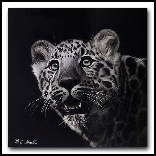 Spellbound - Scratchboard Amur Leopard