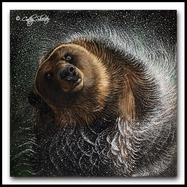 Spin Cycle - Grizzly Bear Scratchboard Art
