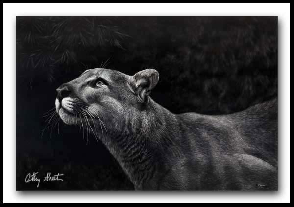 Spring Loaded - Cougar Scratchboard