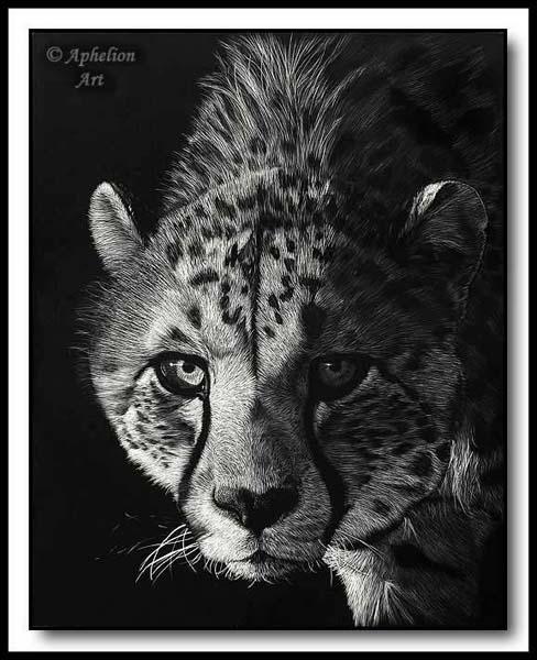Staredown- scratchboard cheetah