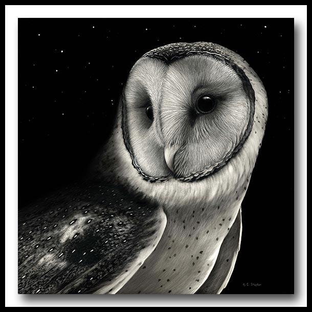 Barn Owl - Scratchboard Art
