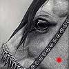 Arabian Elegance - scratchboard art