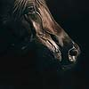 Arabian Night - Scratchboard Horse