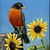 The Early Bird - Scratchboard