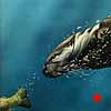 At the End of the Rainbow - Scratchboard River Otter and Rainbow Trout