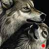 Family Reunion - Scratchboard Art Wolves