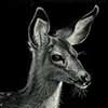 Fawn Over Me - Scratchboard