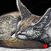 Book Ends - Scratchboard Art Fennec Foxes