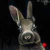 Honey Bunny - Scratchboard Art Rabbit