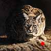 The Hunger Games - Scratchboard Art Bobcat