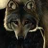 Hunter's Moon - Scratchboard Art Wolf
