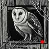 The Innkeeper - Scratchboard Owl
