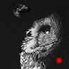Intrigue - Scratchboard Art Great Gray Owl