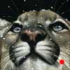 Lion About The Weather' - Scratchboard Art Mountain Lion