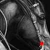 On The Job - Scratchboard Horse