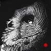 Intrigue - Scratchboard Art Great Gray Owl