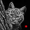 Peek-A-Boo - Scratchboard Art Bobcat Kitten