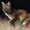 Poised - Scratchboard Art Fox
