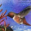Radiant Rufous - Scratchboard and Ink