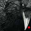 Caw of the Wild - Scratchboard Raven
