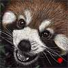 All Smiles - Scratchboard Art Red Panda