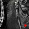 Roping Horse - scratchboard art