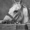 Roping Box Readiness - graphite pencil