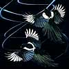 Scatter - Scratchboard Magpies
