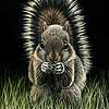 Shirley the baby squirrel - Scratchboard