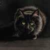 Target Acquired - scratchboard cat