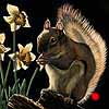 A Taste Of Spring - Scratchboard Art Red Squirrel