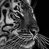 tigermini2 - Scratchboard