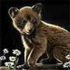 To Bee - Scratchboard Bear