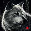Vigilant - Scratchboard Art Wolf