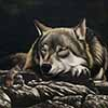 What Dreams May Come - Scratchboard Gray Wolf